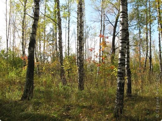 """Понимаю, что на дворе весна, а я тут с осенними зарисовками. Просто выложу снимки параллельно предыдущему, летнему фоторепортажу """" Прогулка по лесу"""". Т е. Примерно те же места, только сфотографированы осенью.  фото 2"""