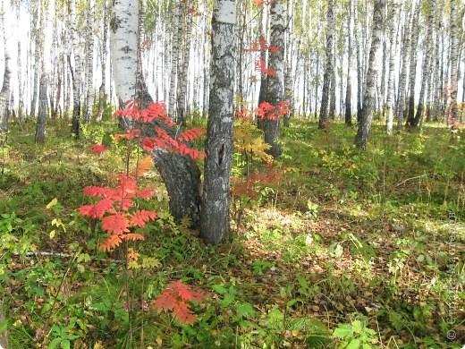 """Понимаю, что на дворе весна, а я тут с осенними зарисовками. Просто выложу снимки параллельно предыдущему, летнему фоторепортажу """" Прогулка по лесу"""". Т е. Примерно те же места, только сфотографированы осенью.  фото 3"""