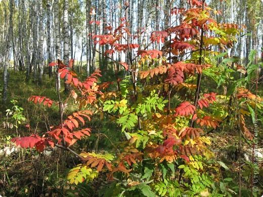 """Понимаю, что на дворе весна, а я тут с осенними зарисовками. Просто выложу снимки параллельно предыдущему, летнему фоторепортажу """" Прогулка по лесу"""". Т е. Примерно те же места, только сфотографированы осенью.  фото 1"""