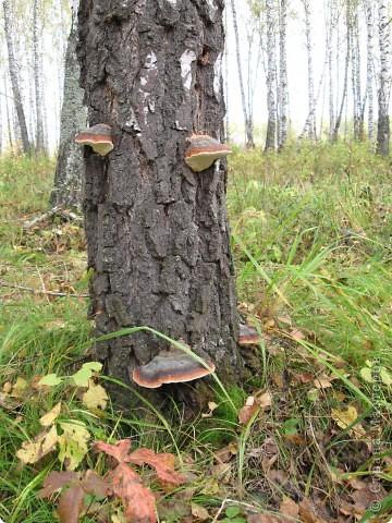 """Понимаю, что на дворе весна, а я тут с осенними зарисовками. Просто выложу снимки параллельно предыдущему, летнему фоторепортажу """" Прогулка по лесу"""". Т е. Примерно те же места, только сфотографированы осенью.  фото 7"""