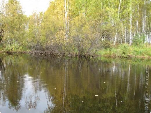 """Понимаю, что на дворе весна, а я тут с осенними зарисовками. Просто выложу снимки параллельно предыдущему, летнему фоторепортажу """" Прогулка по лесу"""". Т е. Примерно те же места, только сфотографированы осенью.  фото 4"""