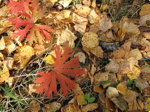 """Понимаю, что на дворе весна, а я тут с осенними зарисовками. Просто выложу снимки параллельно предыдущему, летнему фоторепортажу """" Прогулка по лесу"""". Т е. Примерно те же места, только сфотографированы осенью.  фото 14"""