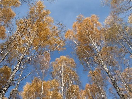 """Понимаю, что на дворе весна, а я тут с осенними зарисовками. Просто выложу снимки параллельно предыдущему, летнему фоторепортажу """" Прогулка по лесу"""". Т е. Примерно те же места, только сфотографированы осенью.  фото 10"""