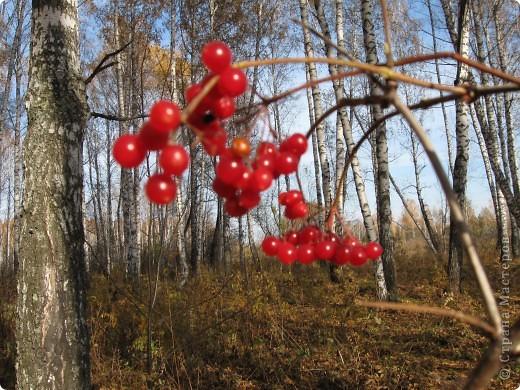 """Понимаю, что на дворе весна, а я тут с осенними зарисовками. Просто выложу снимки параллельно предыдущему, летнему фоторепортажу """" Прогулка по лесу"""". Т е. Примерно те же места, только сфотографированы осенью.  фото 11"""