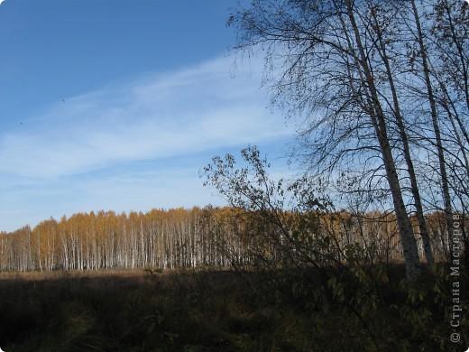 """Понимаю, что на дворе весна, а я тут с осенними зарисовками. Просто выложу снимки параллельно предыдущему, летнему фоторепортажу """" Прогулка по лесу"""". Т е. Примерно те же места, только сфотографированы осенью.  фото 13"""