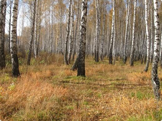"""Понимаю, что на дворе весна, а я тут с осенними зарисовками. Просто выложу снимки параллельно предыдущему, летнему фоторепортажу """" Прогулка по лесу"""". Т е. Примерно те же места, только сфотографированы осенью.  фото 17"""