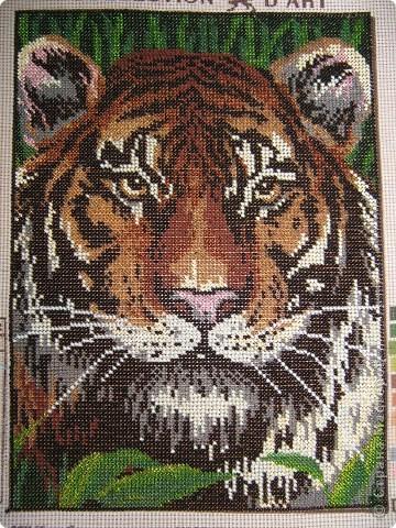 Тигр вышитый бисером.13068 бисеринок. фото 1