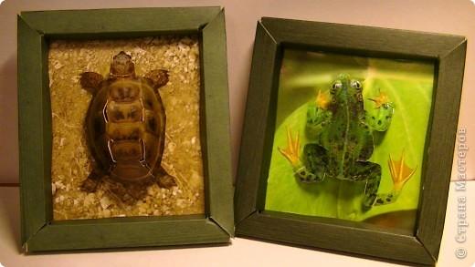 Черепашка и лягушка