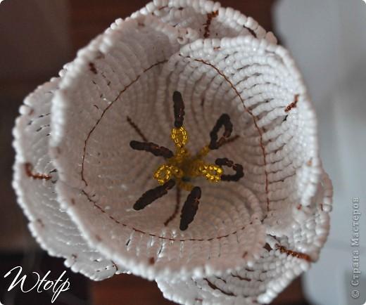Тюльпан фото 5