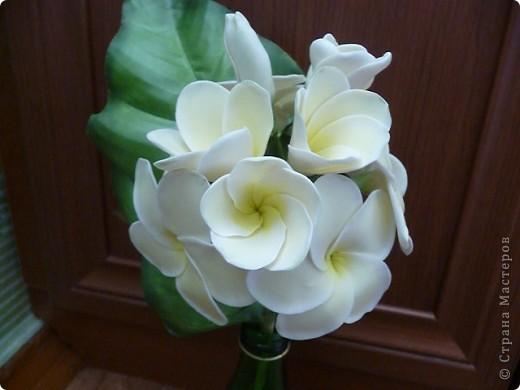 Плюмерию лепила по замечательному МК Валентины (ClayART) - http://stranamasterov.ru/node/144839 фото 1