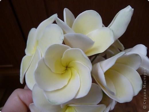 Плюмерию лепила по замечательному МК Валентины (ClayART) - http://stranamasterov.ru/node/144839 фото 4