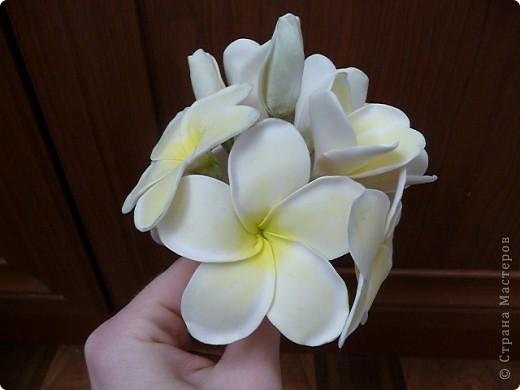 Плюмерию лепила по замечательному МК Валентины (ClayART) - http://stranamasterov.ru/node/144839 фото 5