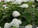Цветочки в моем садочке фото 9