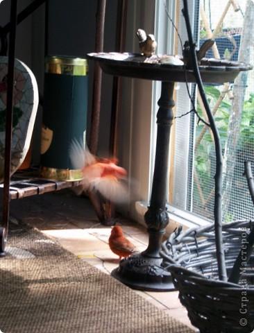 Уже знакомые Вам волнистые попугайчики http://stranamasterov.ru/node/170567 и те воробьинообразные, с кем Вы сейчас познакомитесь, живут на  этой веранде совершенно свободными.  Воробей мой, воробьишка!  Серый, юркий, словно мышка.  Глазки — бисер, лапки — врозь,  Лапки — боком, лапки — вкось...  Прыгай, прыгай, я не трону —  Видишь, хлебца накрошил...  Двинь-ка клювом в бок ворону,  Кто ее сюда просил?  Прыгни ближе, ну-ка, ну-ка,  Так, вот так, еще чуть-чуть...  Ветер сыплет снегом, злюка,  И на спинку, и на грудь.  Подружись со мной, пичужка,  Будем вместе в доме жить,  Сядем рядышком под вьюшкой,  Будем азбуку учить...  Ближе, ну еще немножко...  Фурх! Удрал... Какой нахал!  Съел все зерна, съел все крошки  И спасиба не сказал.  (1921) Саша Чёрный  фото 38