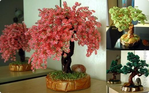 Мои новые деревья фото 1