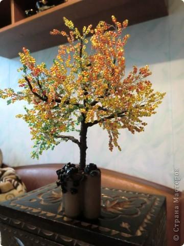 Осеннее деревце фото 2