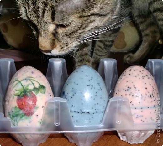 Еничка исследует неопознанные яйцеобразные объекты)) фото 1
