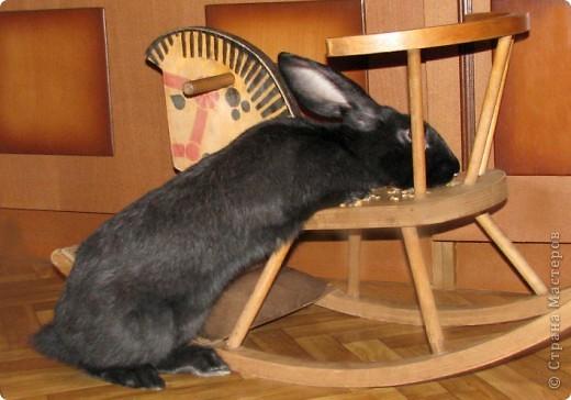 """Очень хочется поделиться новыми впечатлениями о нашем кролике, ведь не все так, как казалось! Здесь  начало этой истории http://stranamasterov.ru/node/134988 И вот, уже прошло чуть больше 4х месяцев, с появления этого ушастого чуда в нашем доме! Конечно, мы очень любим нашего кролика! Но сюрпризов с этим """"малышом"""" у нас хватает)))) Как видно по фото, кролик у нас.. мягко говоря, не карликовый, и даже не декоративный)))) как обещали в """"зоомагазине""""! Но самый большой сюрприз, и самый неожиданный, прояснился только вчера! Оказывается, наша Кнопочка, вовсе и не Кнопочка, а КНОП! Это, конечно, не повлияет на наши чувства к этому чуду, но.. Все же, я хотела именно девочку, по некоторым причинам.. Девочки не метят территорию! Их железы не имеют запаха! Они более привязчивы к людям (хотя и наш Кнопик очень ласковый и любит общение) Но, наш малыш, пока не имеет запаха, но территорию уже в нескольких местах пометил! Первое время, Кнопу хватало Катиной (старшая дочь) комнаты, а выход мы загораживали перегородкой. Но, малыш подрос, и теперь он настойчиво не признает такие ограниченные жизненные условия! Стал перепрыгивать перегородку, лапами шкрябать закрытую дверь.. и добился таки свободы! Гуляет по свему дому, кроме кухни! Туда сам не заходит.. Пока?! Но надеюсь, что в кухню он не пойдет, так как там очень много проводов!  И пометил несколько укромных мест, в том числе и коробку с детскими игрушками! Как бы говоря: это все мои владения! Еще, наш малыш любит бегать за ногами, получается игра в догонялки! А еще, когда кого-то встречает - жужжит и бегает вокруг ног!  А когда я сильно загрустила (история с зайкой шитой была...), он лапами расчесывал волосы и лизал лоб - это самое необычное из того, что он делал!! Могу описать его так: это смесь самой неугомонной и игривой собаки, кошки и лошади!!!! За минуту он оббежит все все все и громким топотом!!!! Любопытный, как Буратино)))  фото 3"""