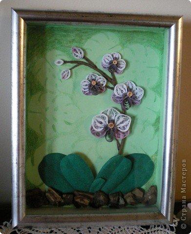 Вот такая орхидея у меня теперь цветёт. А главное, ни поливать, ни брызгать не надо! )))  фото 2