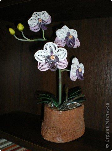 Вот такая орхидея у меня теперь цветёт. А главное, ни поливать, ни брызгать не надо! )))  фото 1