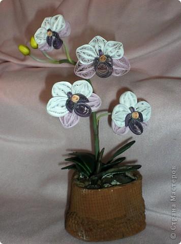 Вот такая орхидея у меня теперь цветёт. А главное, ни поливать, ни брызгать не надо! )))  фото 10