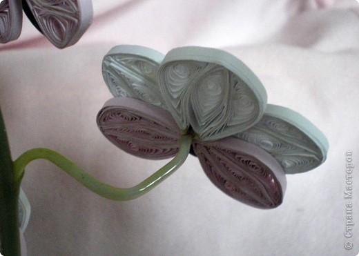 Вот такая орхидея у меня теперь цветёт. А главное, ни поливать, ни брызгать не надо! )))  фото 9