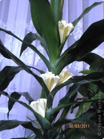 Моя пальма расцвела!!! фото 3