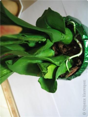 орхидеи по МК SVET1301 фото 3