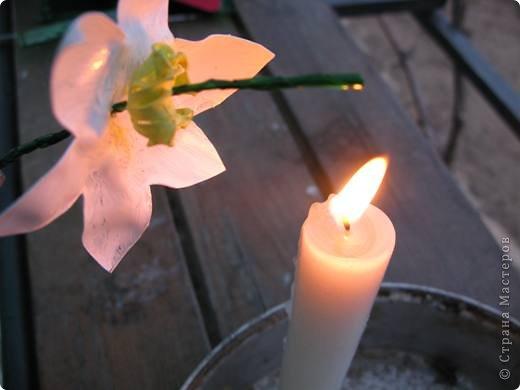 У меня в огороде ВЕСНА! Расцветают нарциссы на грядках. Если Вы подумали, что это на самом деле зацвели первые весенние цветы, то у меня ПОЛУЧИЛОСЬ!!! Сегодня утром у меня под окном расцвели нарциссы.А Вы хотите весны? Тогда давайте творить. фото 28