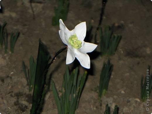 У меня в огороде ВЕСНА! Расцветают нарциссы на грядках. Если Вы подумали, что это на самом деле зацвели первые весенние цветы, то у меня ПОЛУЧИЛОСЬ!!! Сегодня утром у меня под окном расцвели нарциссы.А Вы хотите весны? Тогда давайте творить. фото 1