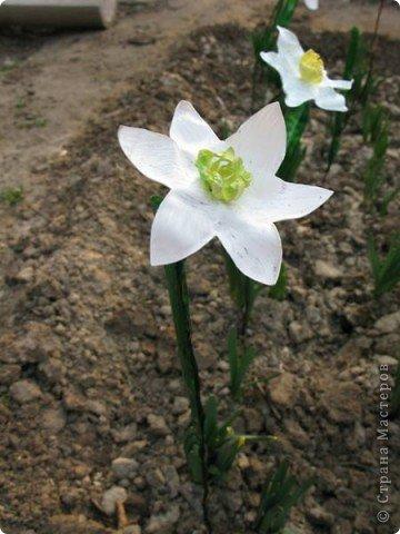У меня в огороде ВЕСНА! Расцветают нарциссы на грядках. Если Вы подумали, что это на самом деле зацвели первые весенние цветы, то у меня ПОЛУЧИЛОСЬ!!! Сегодня утром у меня под окном расцвели нарциссы.А Вы хотите весны? Тогда давайте творить. фото 33
