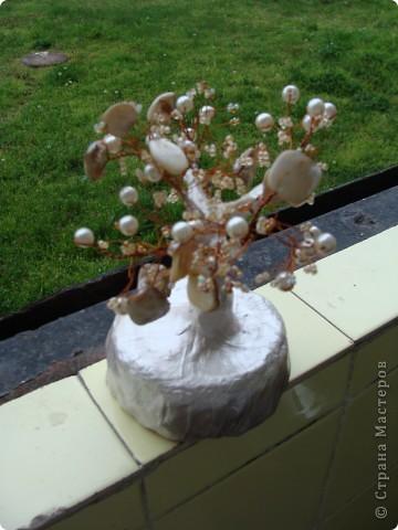 Нежно дръвче! фото 3