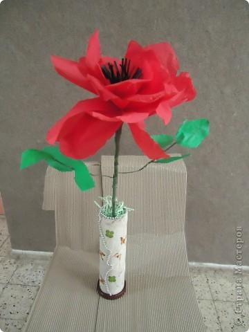Анемон - весенний цветок фото 7
