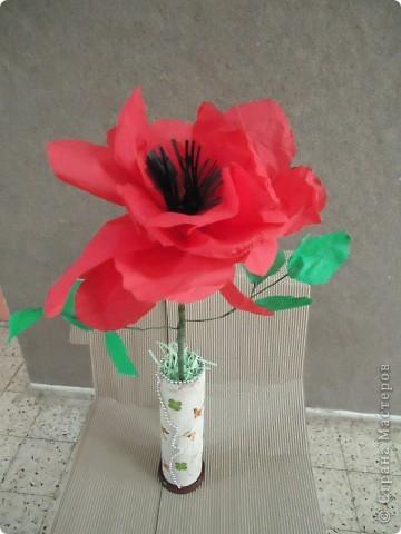 Анемон - весенний цветок фото 6