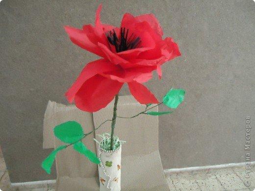 Анемон - весенний цветок фото 5