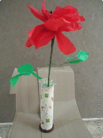 Анемон - весенний цветок фото 3