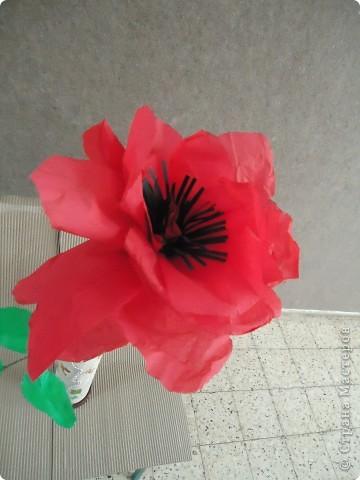 Анемон - весенний цветок фото 1