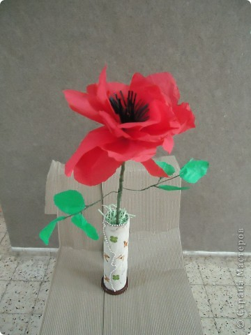 Анемон - весенний цветок фото 2