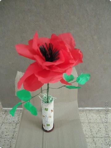 Анемон - весенний цветок фото 4
