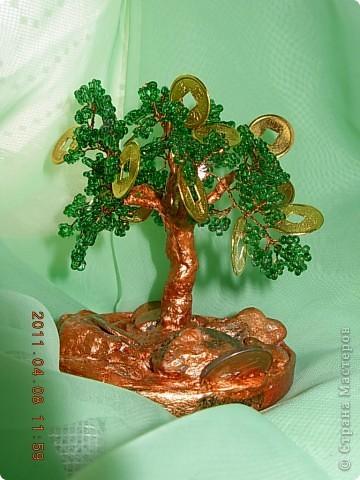 денежное дерево... фото 6