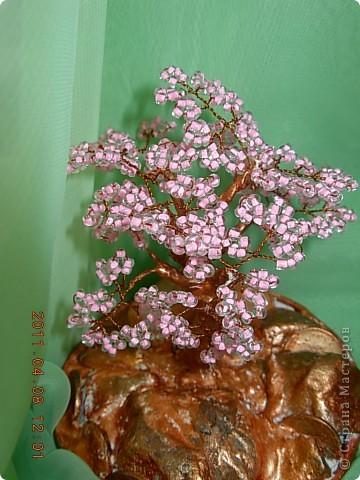 денежное дерево... фото 5