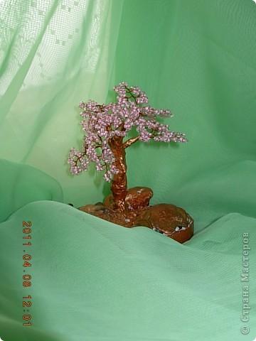 денежное дерево... фото 4