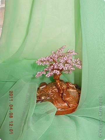 денежное дерево... фото 2