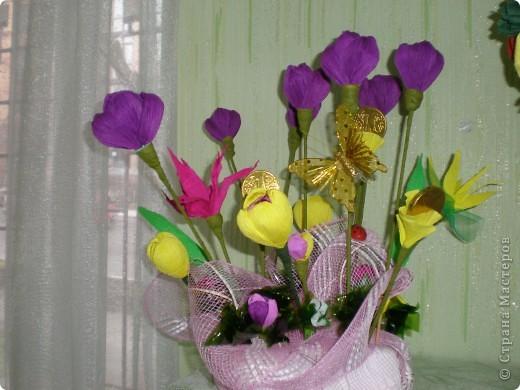 украсили уголок рабочего кабинета такой весёлой и цветущей полянкой крокусов)))