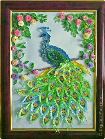 Картина панно рисунок Квиллинг Павлин Бумага Бумажные полосы Клей фото 1