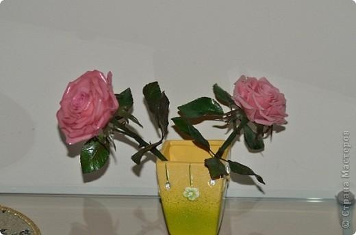 роза фото 12