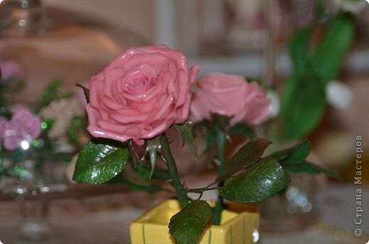 роза фото 13