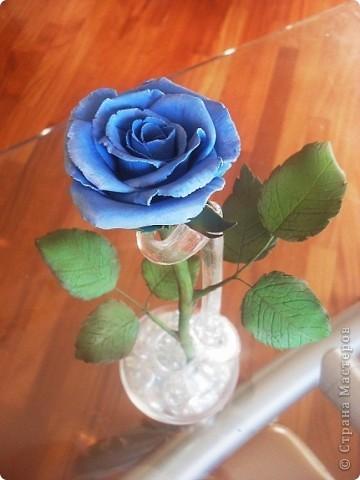 роза фото 9