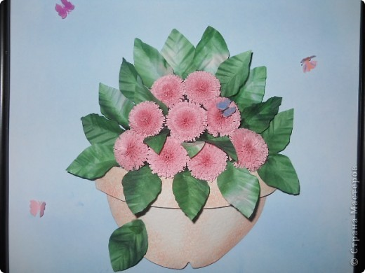 Это хризантемы