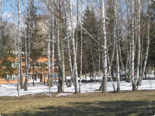 """Десять дней отдыхала в санатории """"Краинка"""" Тульской области. Когда приехала - загрустила... Совершенно невыразительное место, даже сфотографировать нечего... Но потом огляделась - весна идет! фото 1"""